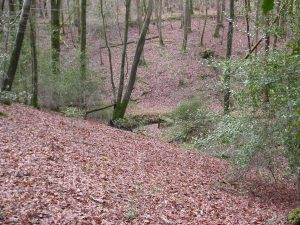 Picture of woodland in Sussex